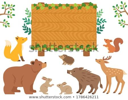 Fakeret aranyos állatok oldal illusztráció fa természet Stock fotó © bluering