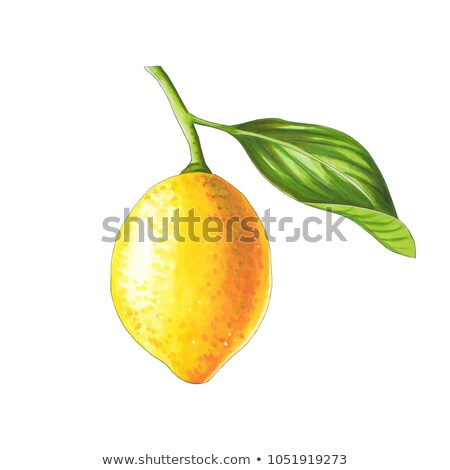 Lemon on a branch on a white background. Sketch done in alcohol  Stock photo © user_10003441
