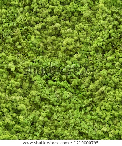 Grass with Moss. Seamless Texture. Stock photo © tashatuvango