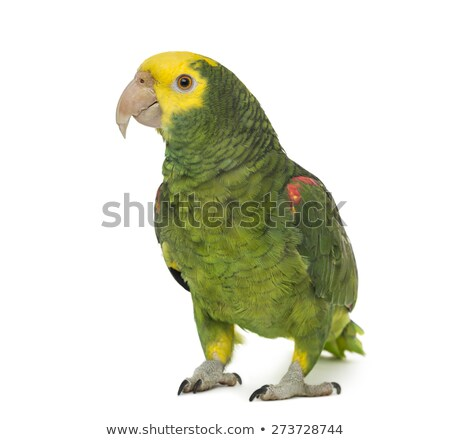 amazon parrot yellow headed oratrix stock photo © lunamarina