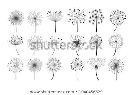 Foto stock: Dandelion · flor · vento · desenho · animado