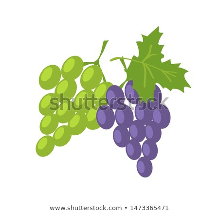 Stock photo: Two Sorts of Grape, Green and Lilac Fresh Fruits