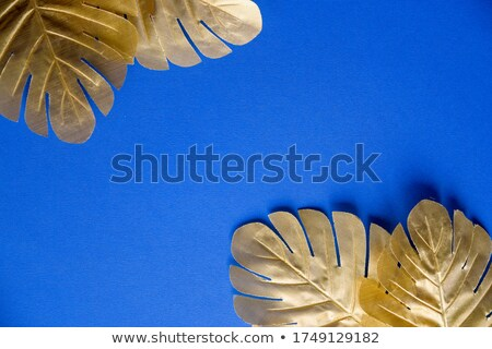 Evergreen palm tropical leaf on a blue background with copy space. Natural plant layout. Stock photo © artjazz