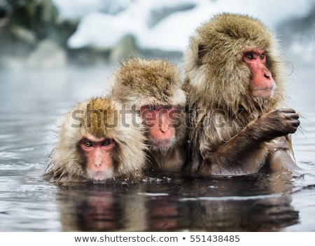 a group of monkey at the river stock photo © colematt