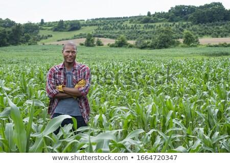 a farmer in rural scene stock photo © colematt