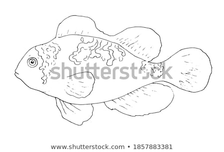 Hand fins for swimming isolated on white background. Vector cartoon close-up illustration. Stock photo © Lady-Luck