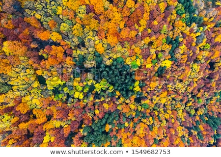 Verde naturale decidue foresta Foto d'archivio © artjazz