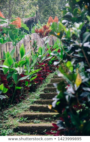 velho · escada · cachoeira · bali · ilha · Indonésia - foto stock © boggy