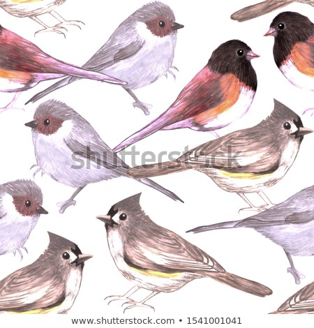 Wild titmouses bushtits and juncos seamless watercolor background Stock photo © shawlinmohd