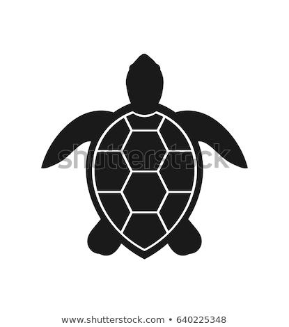 Vector schildpad symbool icon ontwerp kunst Stockfoto © nickylarson974