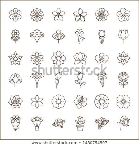 Sakura güzellik çiçek vektör ikon örnek dizayn Stok fotoğraf © Ggs