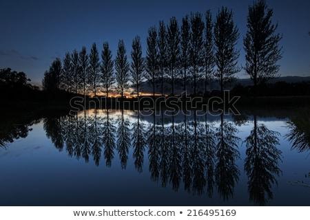 Symmetrie reflectie vijver zonsondergang najaar water Stockfoto © CaptureLight