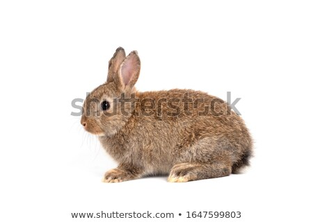 Stockfoto: White Beautiful Rabbit Easter Bunny On Large Copy Space