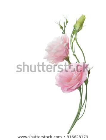 Pâle pétales de rose résumé fraîches mariage rose Photo stock © elenaphoto