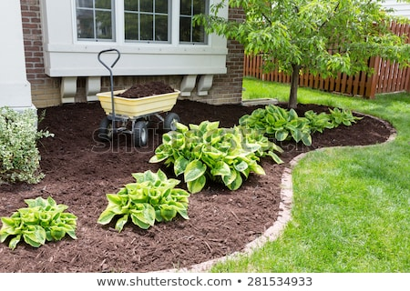 mulch and mulching tools Stock photo © luapvision