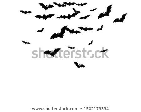 vampire bat vector stock photo © indiwarm