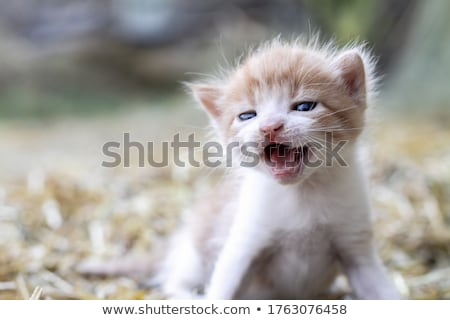 Moeder kat poesje zwarte oranje baby Stockfoto © simply