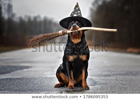 heks · vliegen · bezemsteel · halloween · silhouet · vriendelijk - stockfoto © annavolkova