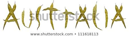 sakız · yaprak · Avustralya · başlık · afiş · logo - stok fotoğraf © byjenjen