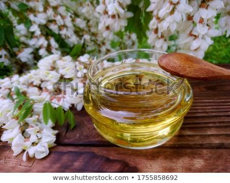 acacia Stock photo © perysty