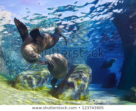 Csók tenger játékos Kalifornia jött együtt Stock fotó © macropixel