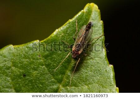 Four Legged Bug Stock photo © derocz