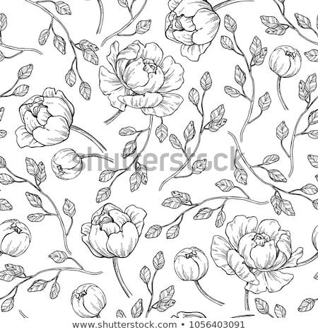 romantic black and white hand drawn floral ornament stock photo © elmiko