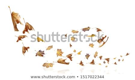 résumé · feuille · tornade · tempête · vitesse · automne - photo stock © jorgenmac