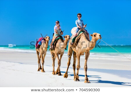 camel family stock photo © kayco