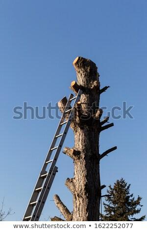 Widział oddziału strony drewna ogród Zdjęcia stock © LianeM