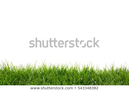 Groen gras witte gras achtergrond ruimte plant Stockfoto © FrameAngel