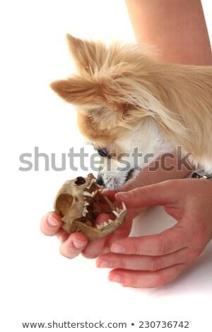 Stock fotó: Macska · koponya · izolált · fehér · kutya · portré