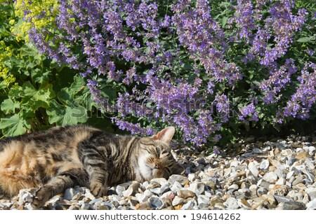 kedi · yavrusu · yeme · çim · kedi · ev · yeşil - stok fotoğraf © cynoclub