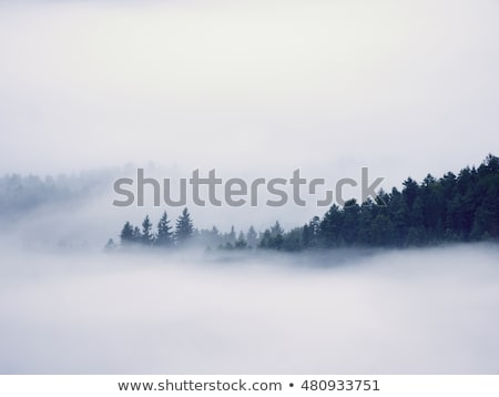 treetop from the ground Stock photo © jarin13