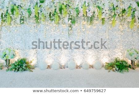 Spring wall background/backdrop Stock photo © Sandralise