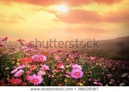 gyönyörű · fekete · hegy · legelő · évszak · háttér - stock fotó © pixachi