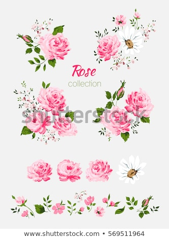 rose · roses · frontière · image · illustration - photo stock © irisangel