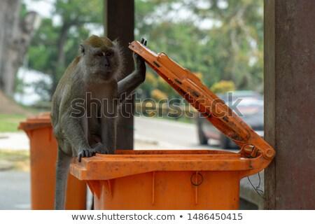 Majmok keres étel hulladék társasági majom Stock fotó © ziprashantzi