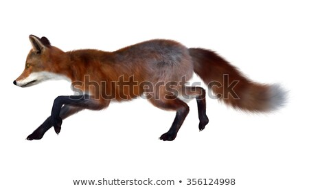 blanche · Fox · rendu · 3d · montagne · sapin · arbres - photo stock © elenarts