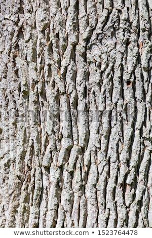 Harmonisch patroon eiken bomen bos voorjaar Stockfoto © meinzahn