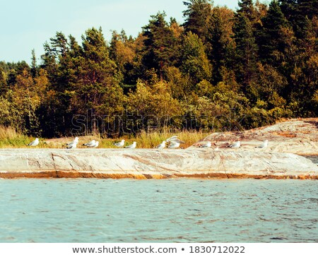 wild north nature landscape lot of rocks on lake shore stock photo © iordani
