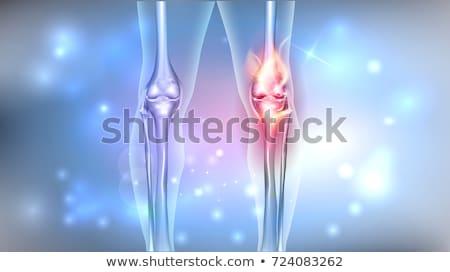 healthy human leg knee anatomy bright design stock photo © tefi