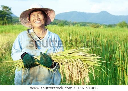 Asian farmer in the farmland Stock photo © adrenalina