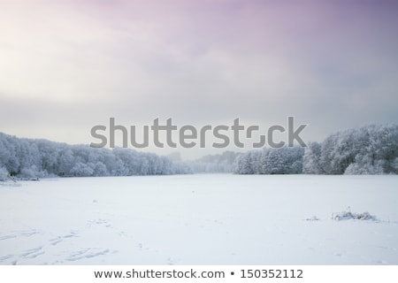 Stock photo: Winter Landscape with Field and Trees Covered with Frost and Snow in the Fog
