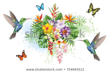 Hummingbird tropic arrangement Stock photo © PurpleBird