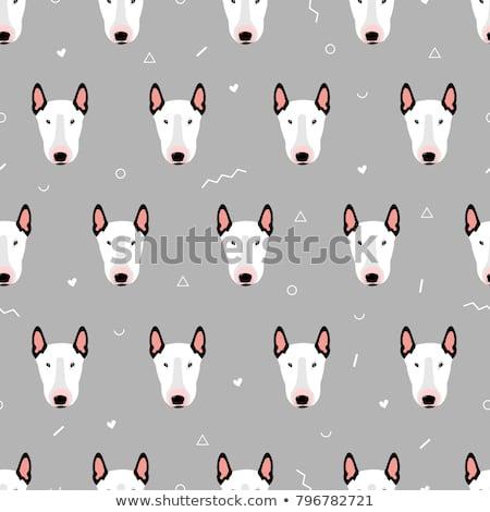 bull terrier dog cartoon animal character stock photo © izakowski