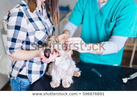 девушки · врач · собака · оружия · Cartoon · девочку - Сток-фото © liolle