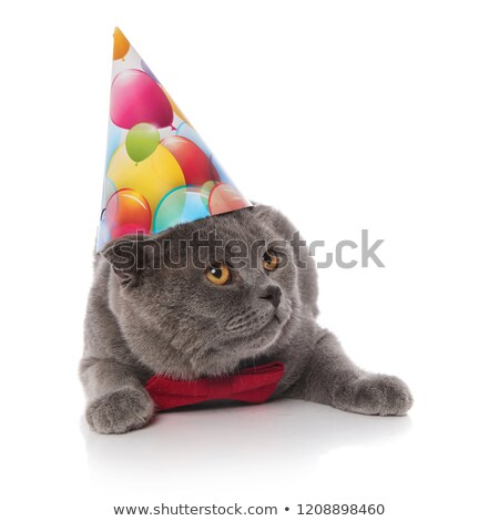 cat with birthday hat and bowtie looks up to side Stock photo © feedough