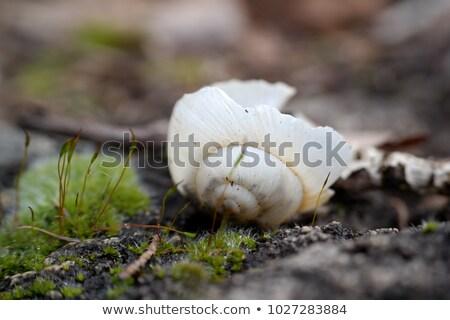 Foto stock: Cogumelo · casa · inverno · floresta · desenho · animado · silhueta