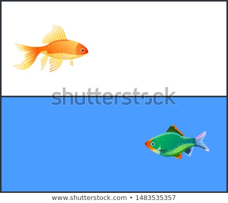 green tiger barb goldfish double color fond stock photo © robuart
